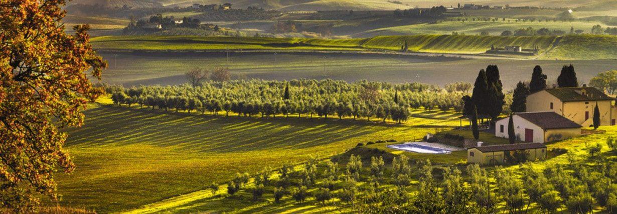 Oliven Anbaugebiet